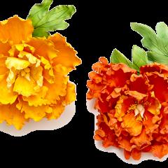 Potonika iz fondanta - Gum paste - Kako naredimo cvet?